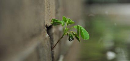 Gewalt bringt keine Pflanze zum Wachsen,